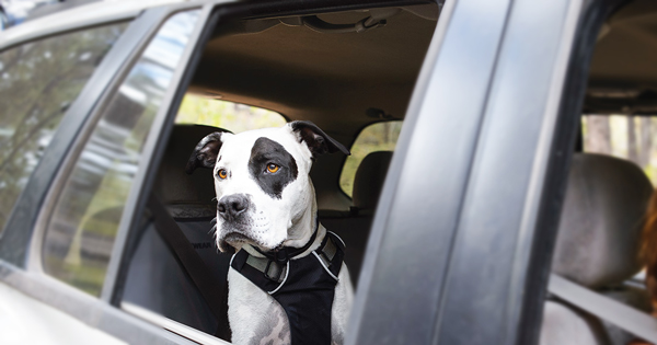 Safe Car Travel with your Dog