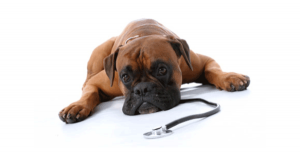 FIRST AID FOR ANIMALS