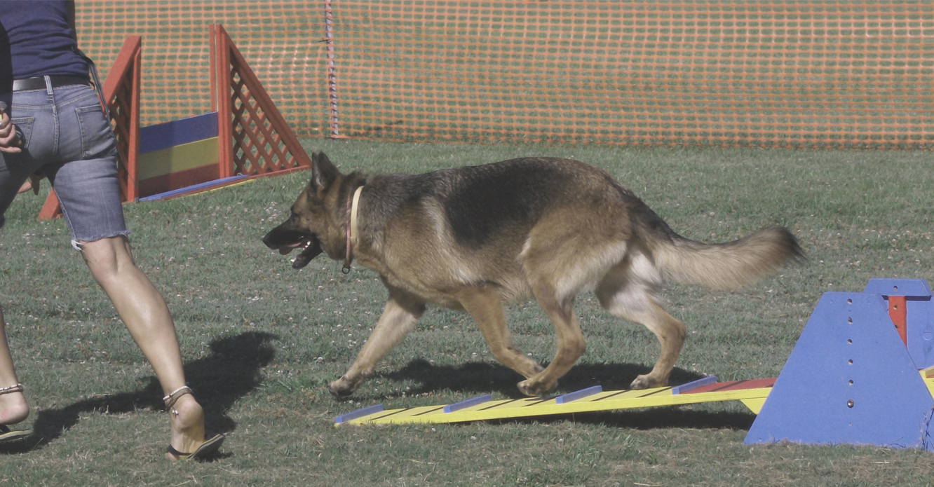 Agility Foundation Course