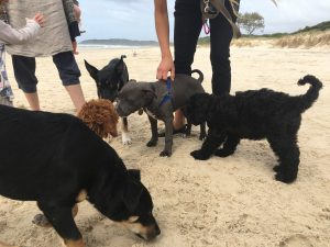 PUPPY SOCIALISATION AND VACCINATIONS BELONG TOGETHER!